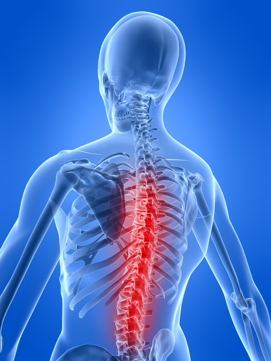 Transection Of Sc Kjg moreover Spinal Cord Injury Rehabilitation N furthermore  furthermore Brain Stem Injury furthermore The Human Brain Anatomy Human Brain Anatomy Eiss Bit. on spinal cord injury functions